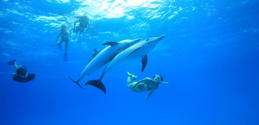 Gita giornaliera day trip madyson sailing - Bagno coi delfini ...